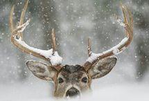 Herten/Deer♥