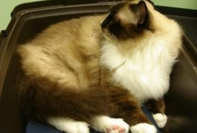 Acupuncture for Cats