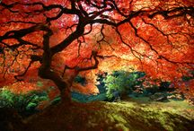Beautiful Spaces / by Kristina