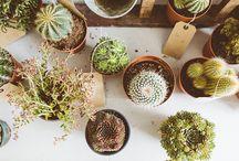 B O T A N I Q U E / Inspiration botanique