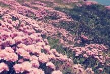 Flower fields / Where you can be free!