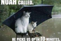 funny weather pics