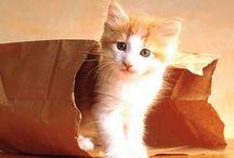 Amours à ' cat '  pattes / Boules de Poils et Douceur de Plumes
