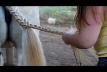 horsehair ideas