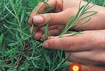 Rostliny pestovani, rozmnozovani