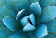 ~turquoise~