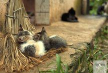 animali carini