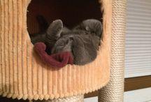 Koty / Cat