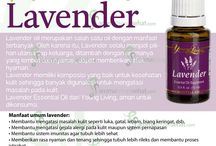 Lavender youngliving