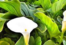 Jardinería y Paisajismo / by Mantenimientos Giner y Mira