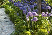 Dream House - Garden ideas