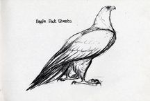Eagle Fackt Sheets / How to draw eagle