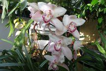 Fiori di Patrizia - Flowers in my garden / fiori, piante, coltivati nel giardino di Patrizia