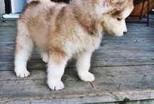 Puppy Goals