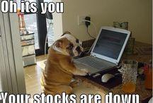 Pauls. Bulldogs / Photos of bulldogs / by Paul Szypitka