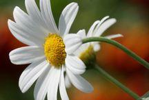 Flowers / by Sandra Osborne