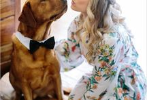 Party Pets / Weddings aren't just reserved for humans!  Find out how you can include your beloved pets in your special day!