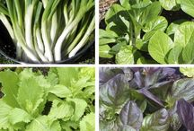 quick grow veg
