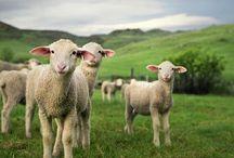 Farm Life / by Carolyn Prescott
