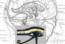 el ojo de orus - glándula pineal