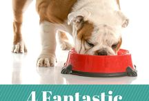 Food for Lily / Good ideas for my fussy dog