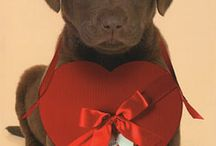 Labs in love!! / Labs in love!!