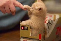 Mačiatka a mačky
