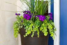 outdoor plants in pots for shady front porch