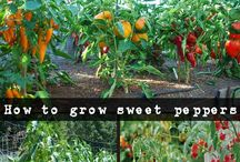 Sweet pepper delights