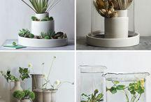 cactus & succulent
