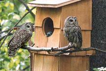 Owls in my Garden