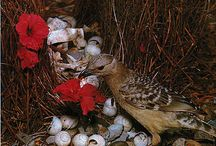 Biodiversity : birds ; bower birds