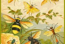 insects, bees etc