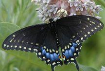 Life list - Butterflies, etc