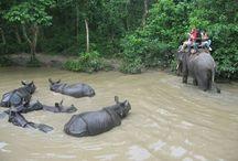Chitwan National Park Teaching Program / Chitwan National Park Teaching Program