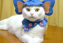 Halloween cat costumes / Some nice ideas for Halloween cat costumes