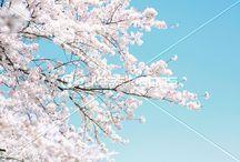 春 spring