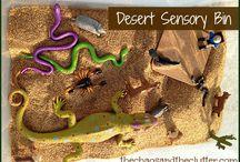 Sensory Bins / by Candice Tenorio