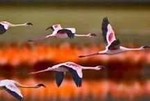 Greater flamingos in #Tanzania #HeathrowGatwickCars.com