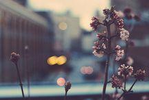Cute :>