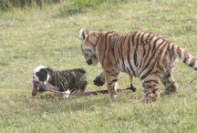 Cats Big and Small / by Brian Lanfear