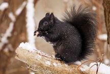 Squirrells...
