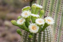 Arizona in the Spring