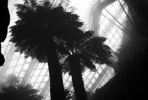 Black & white / My little gallery