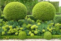 Topiary forms and combinations