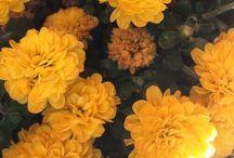yellow ✨