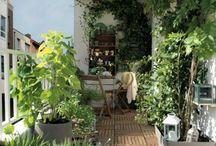 Jardin / Plantes