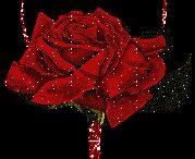 la rosa de la amor.