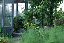 øknsevad gartneri