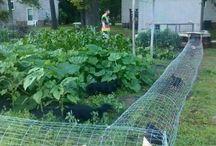 chicken walk cages